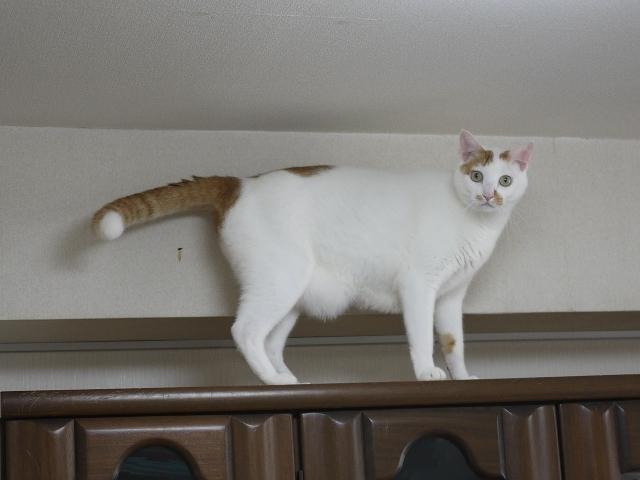 猫のお留守番 ミーくん編。_a0143140_20201703.jpg