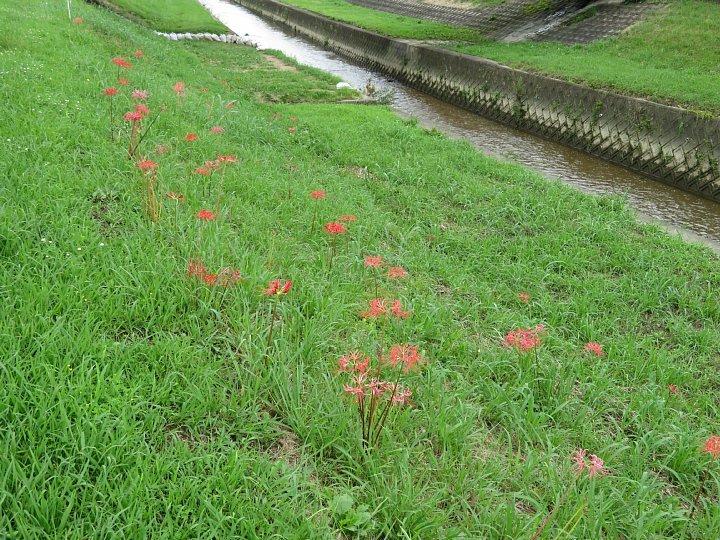 2020年7月31日 河川敷に赤い花が・・・  !(^^)!_b0341140_18522289.jpg
