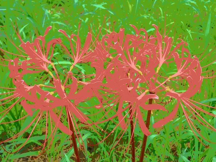 2020年7月31日 河川敷に赤い花が・・・  !(^^)!_b0341140_18531000.jpg