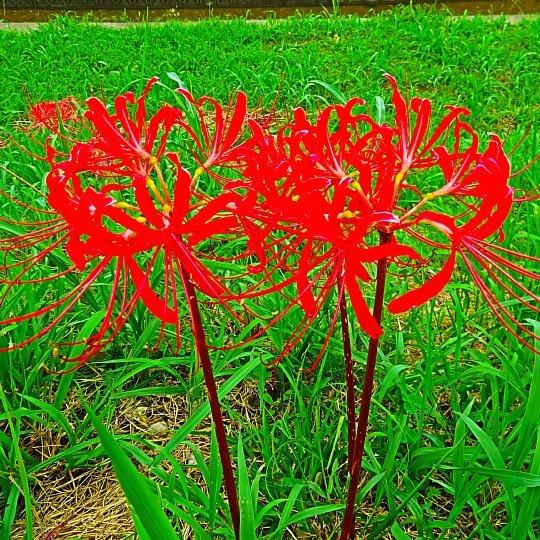 2020年7月31日 河川敷に赤い花が・・・  !(^^)!_b0341140_18532514.jpg
