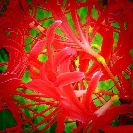 2020年7月31日 河川敷に赤い花が・・・  !(^^)!_b0341140_18534186.jpg