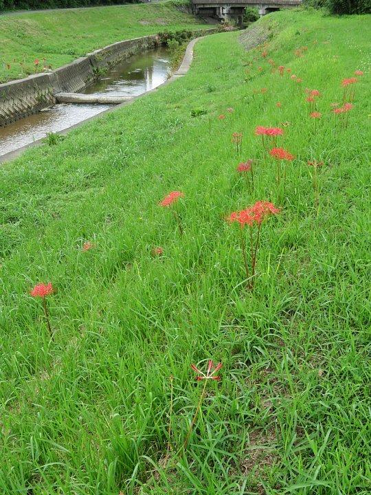 2020年7月31日 河川敷に赤い花が・・・  !(^^)!_b0341140_18575465.jpg