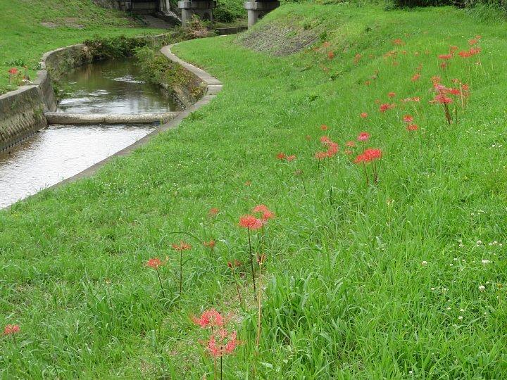 2020年7月31日 河川敷に赤い花が・・・  !(^^)!_b0341140_18580616.jpg