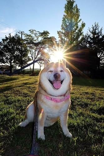 太陽が恋しい_b0314043_07314458.jpg