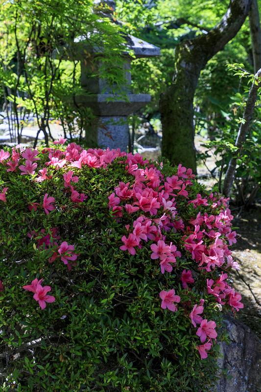 夏の花咲く勧修寺_f0155048_22361295.jpg
