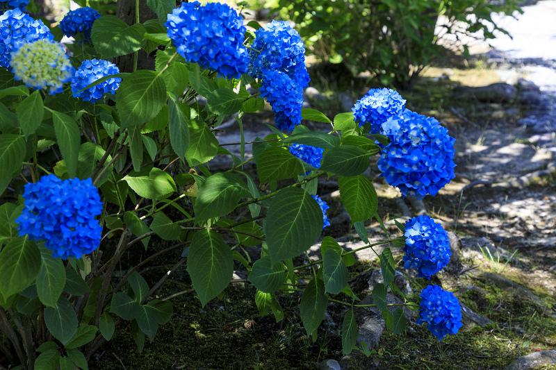 夏の花咲く勧修寺_f0155048_22361817.jpg