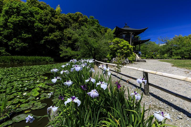 夏の花咲く勧修寺_f0155048_2236333.jpg
