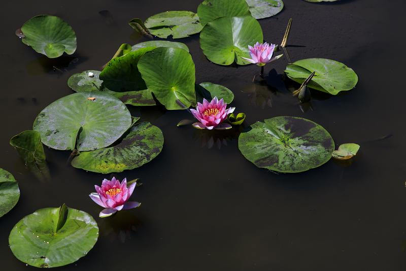 夏の花咲く勧修寺_f0155048_22364775.jpg
