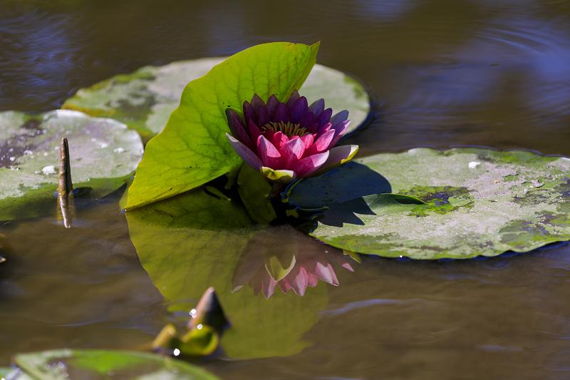 夏の花咲く勧修寺_f0155048_22365220.jpg
