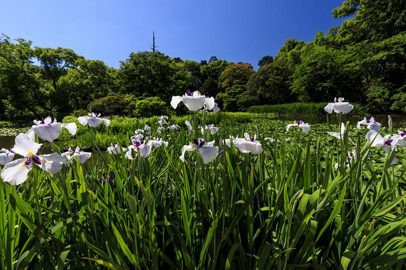 夏の花咲く勧修寺_f0155048_22365833.jpg
