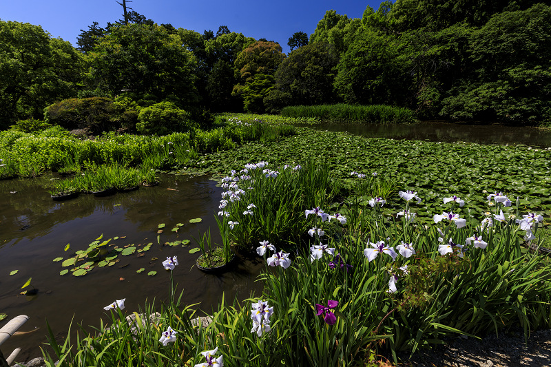 夏の花咲く勧修寺_f0155048_22371650.jpg