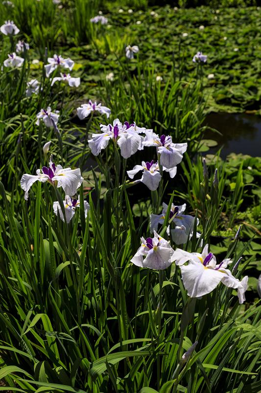 夏の花咲く勧修寺_f0155048_223792.jpg