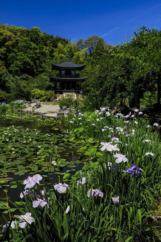 夏の花咲く勧修寺_f0155048_22381594.jpg