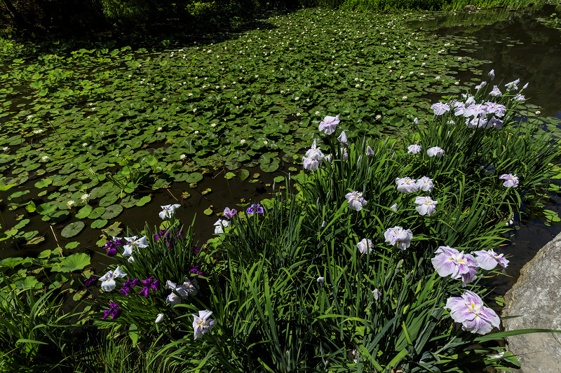 夏の花咲く勧修寺_f0155048_22392422.jpg