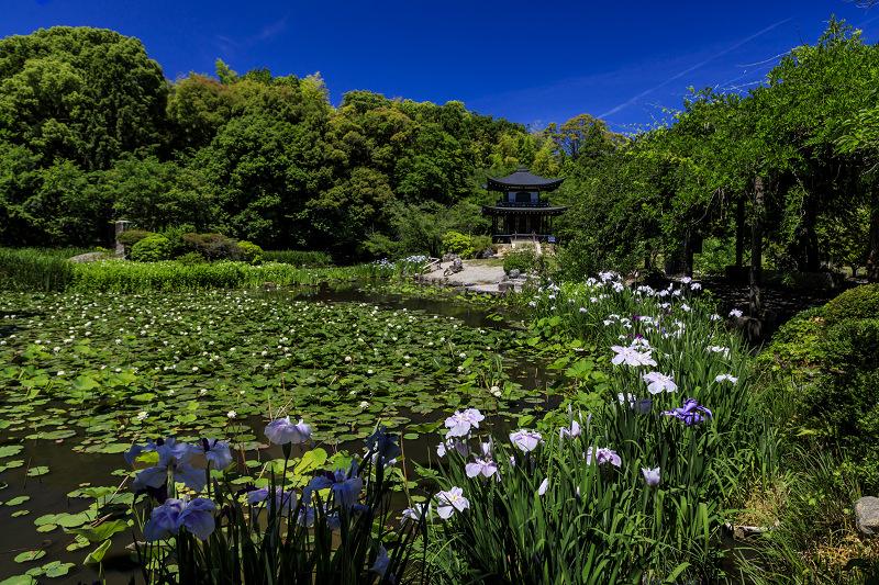 夏の花咲く勧修寺_f0155048_2239730.jpg