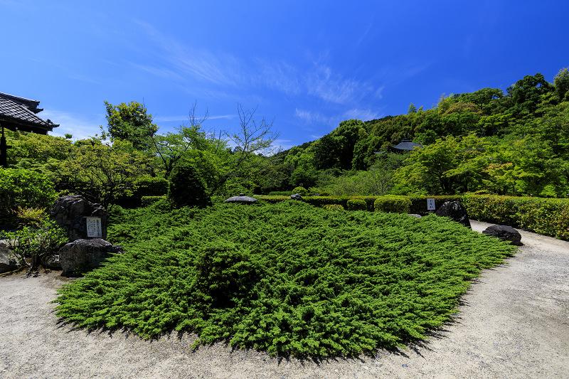 夏の花咲く勧修寺_f0155048_22403994.jpg