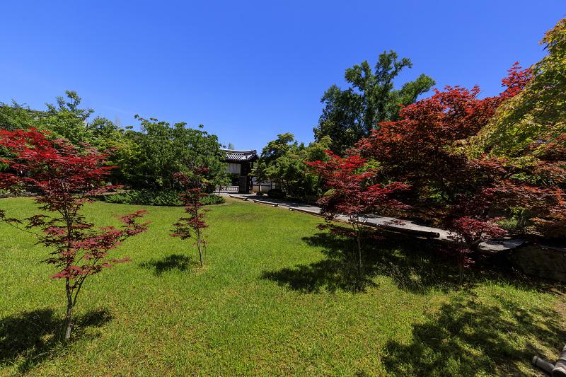 夏の花咲く勧修寺_f0155048_22405298.jpg