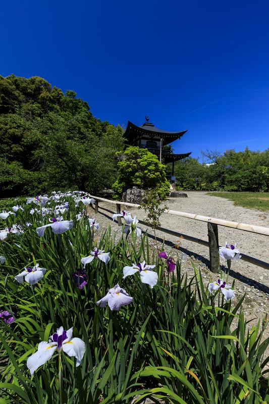 夏の花咲く勧修寺_f0155048_2240866.jpg