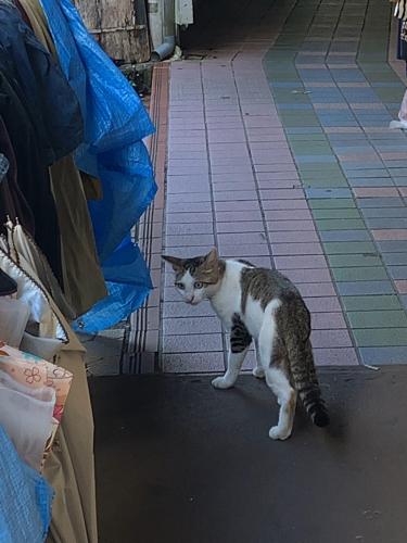 フルーツと猫と、飛行機パラダイス_b0228252_00310352.jpg