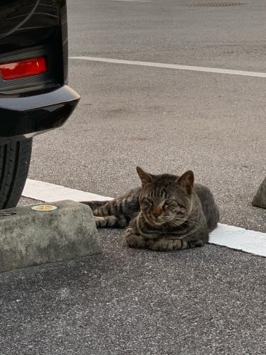 フルーツと猫と、飛行機パラダイス_b0228252_00551224.jpg