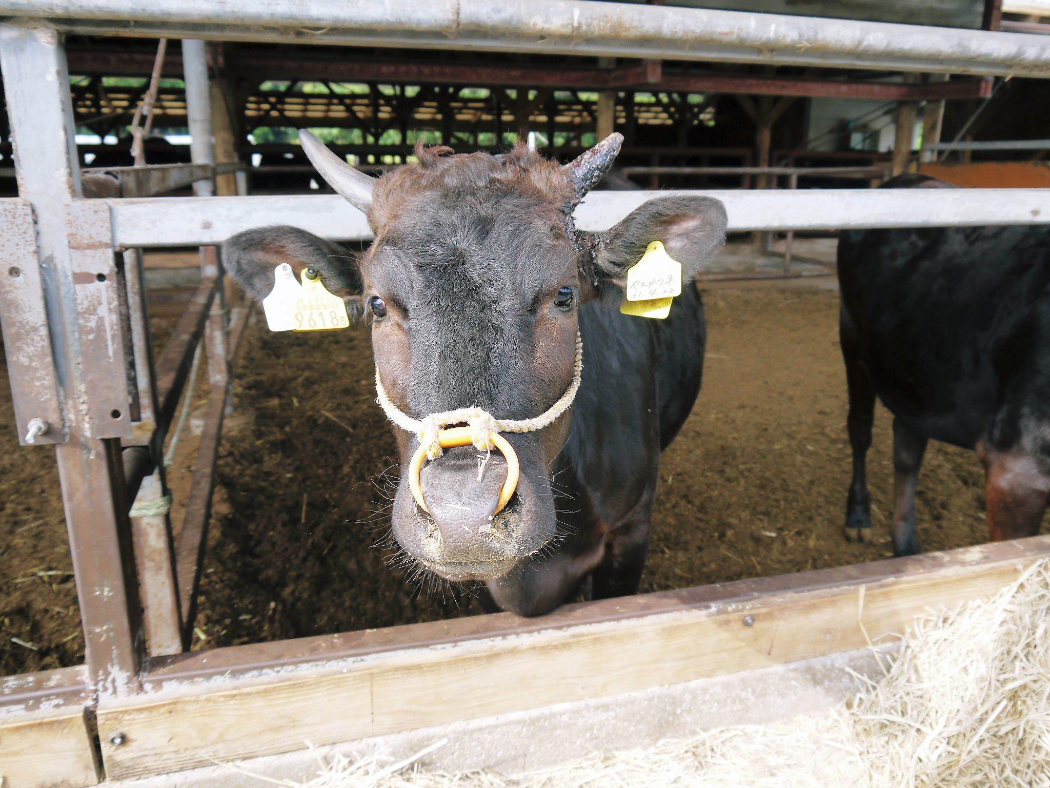 熊本県産の黒毛和牛を100%のハンバーグステーキ!全国のお客様に向け本日初出荷しました!_a0254656_18345109.jpg