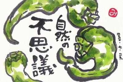 N子さんちの野菜たち_b0140270_07402415.jpg
