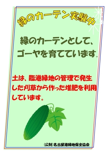 緑のカーテンの実験をはじめました!_d0338682_11375965.jpg