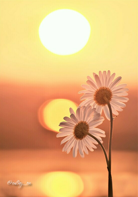 夕陽に_d0177586_13330267.jpg