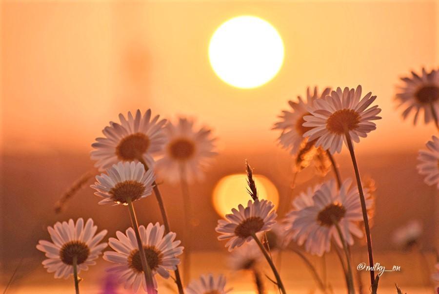 夕陽に_d0177586_13331526.jpg