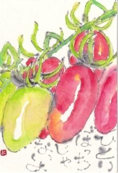 ミニトマトがたくさん_a0030594_22082959.jpg