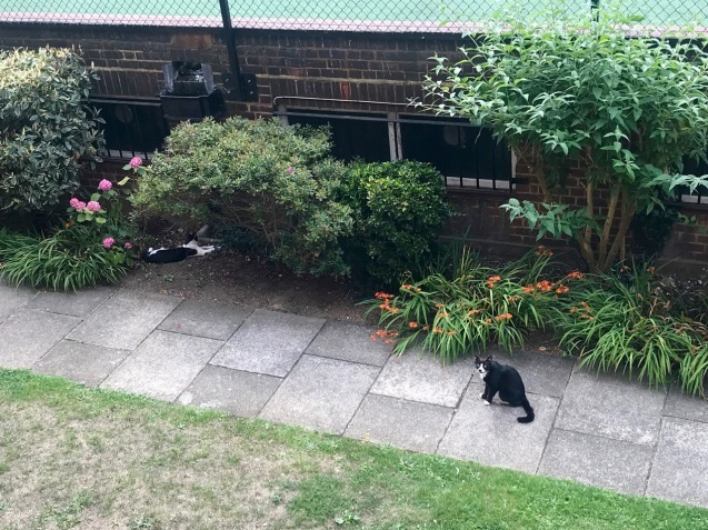近所の猫さんと見つめ合う_e0114020_20313229.jpg