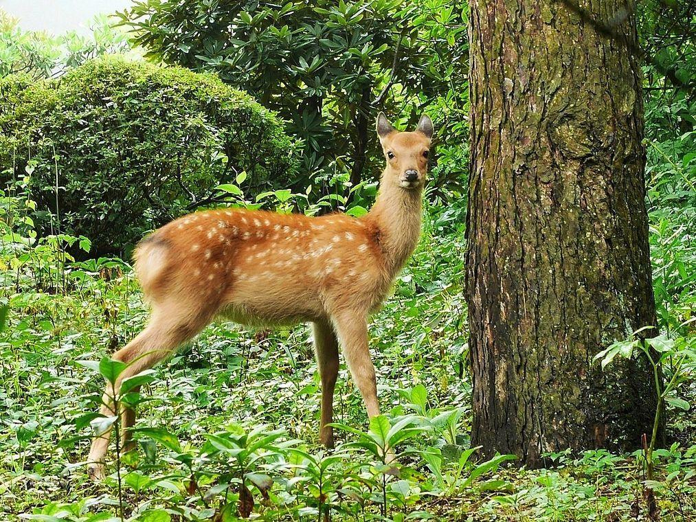 園 赤城 自然 赤城自然園【入園料割引】