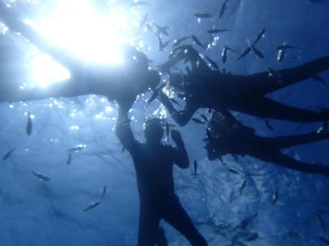 7月29日今日は水納島・ジンベイザメ・青の洞窟!!まさに夏メニューだな!!_c0070933_21394550.jpg