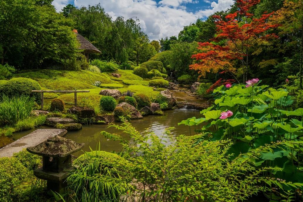 夏の退蔵院に咲く花_e0363038_11412181.jpg