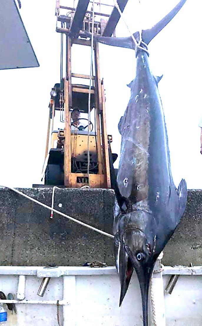 名古屋のD艇さん165キロキャッチ_f0009039_15431499.jpg