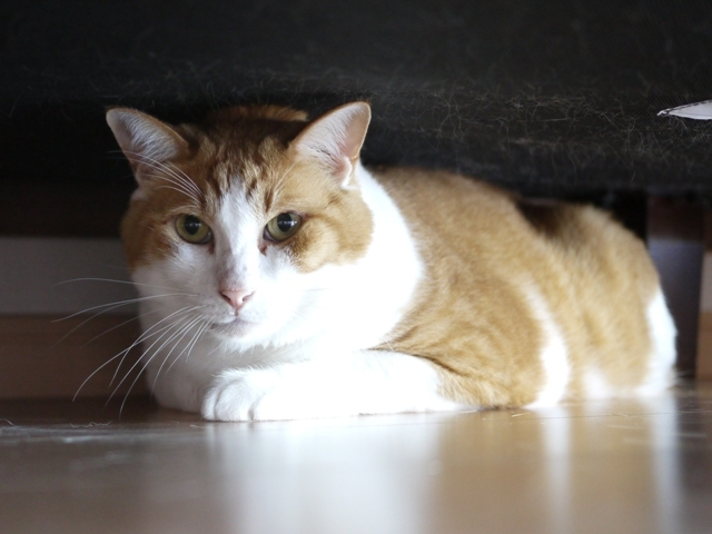猫のお留守番 あずきくん編。_a0143140_20363355.jpg