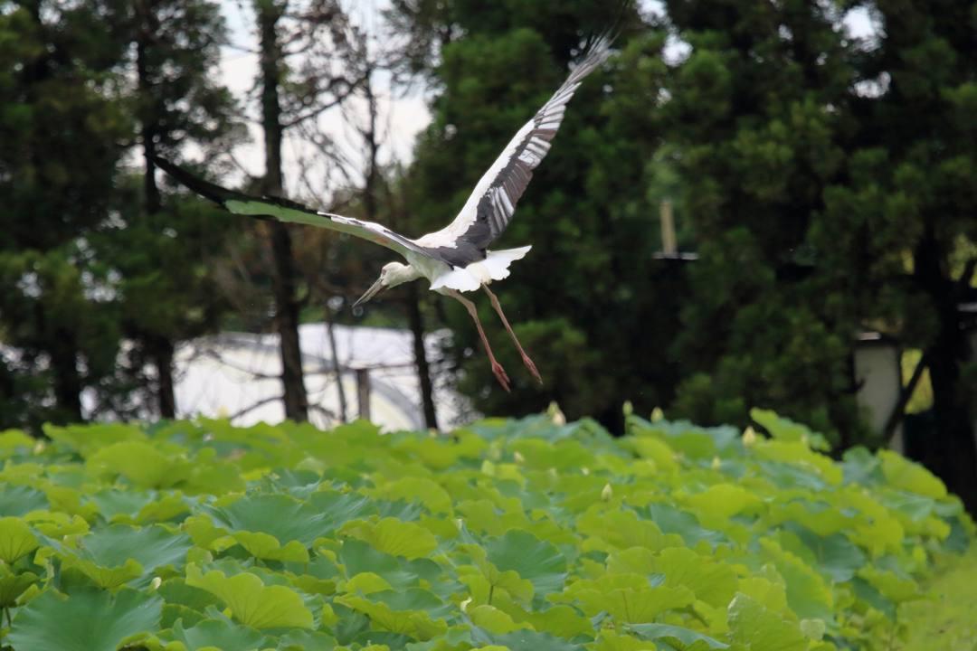 幸せを運ぶ鳥_e0403850_19572070.jpg