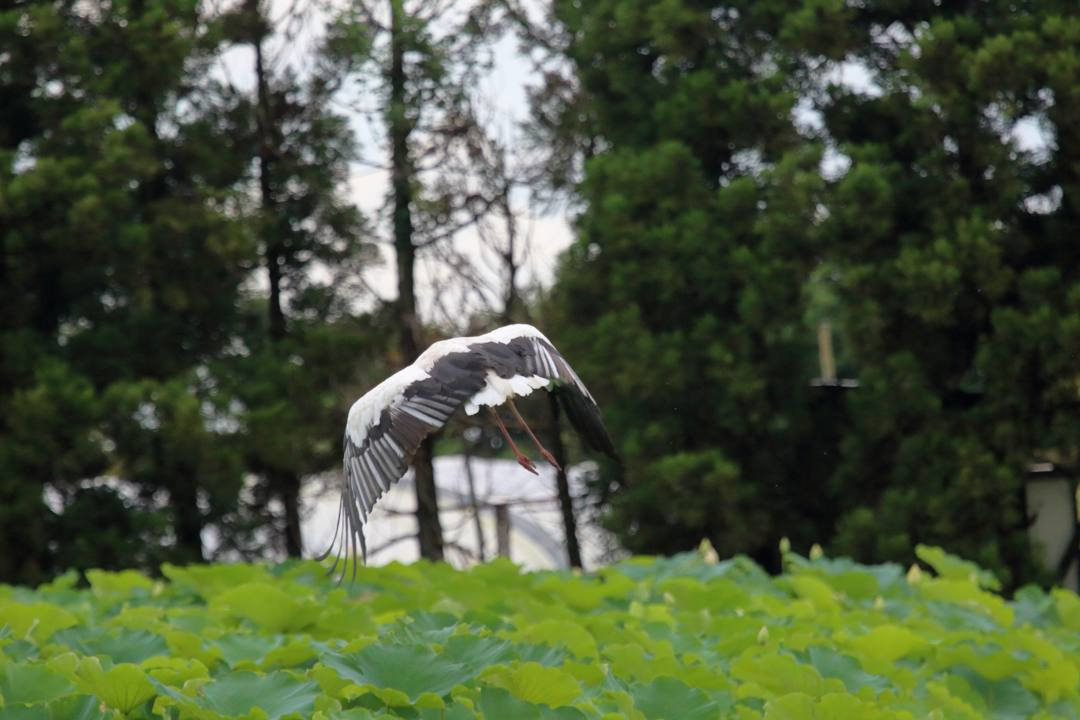 幸せを運ぶ鳥_e0403850_19572501.jpg