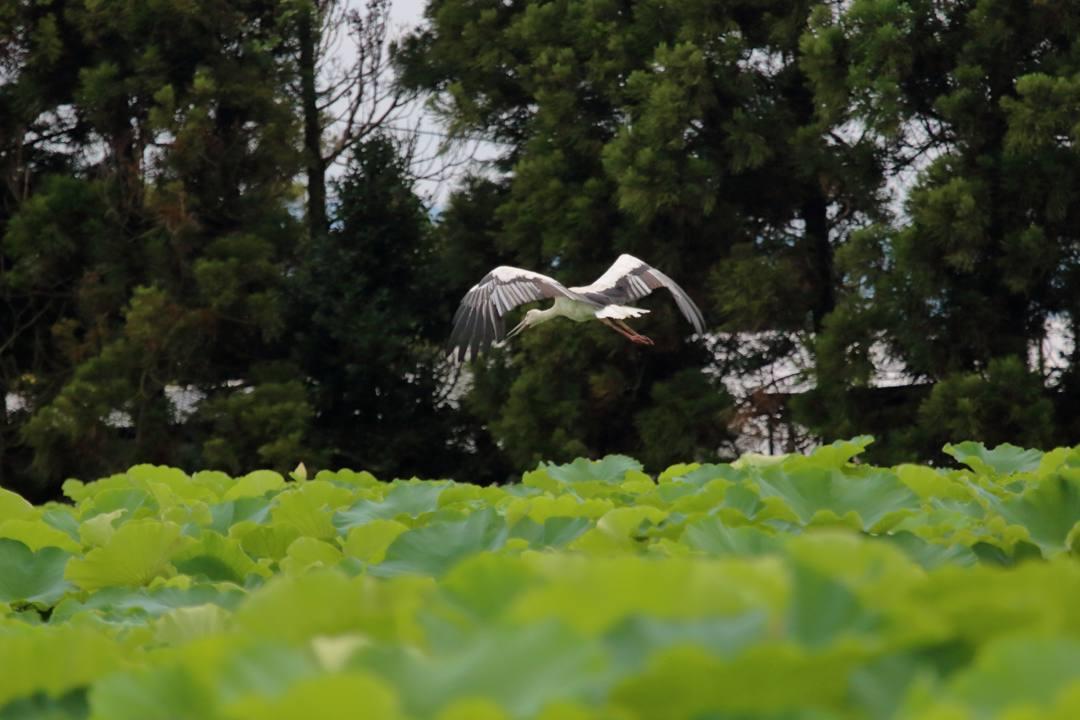 幸せを運ぶ鳥_e0403850_19574071.jpg