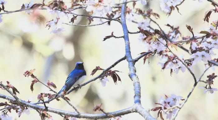 この春の思い出_c0217255_06565891.jpg