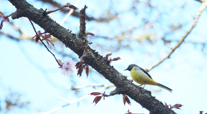 この春の思い出_c0217255_06571971.jpg
