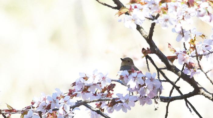 この春の思い出_c0217255_06574945.jpg