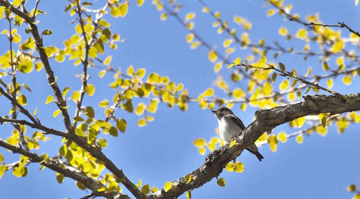 この春の思い出_c0217255_06582873.jpg