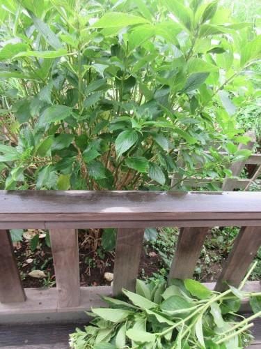 緑が繁り過ぎて_d0369759_20542032.jpg