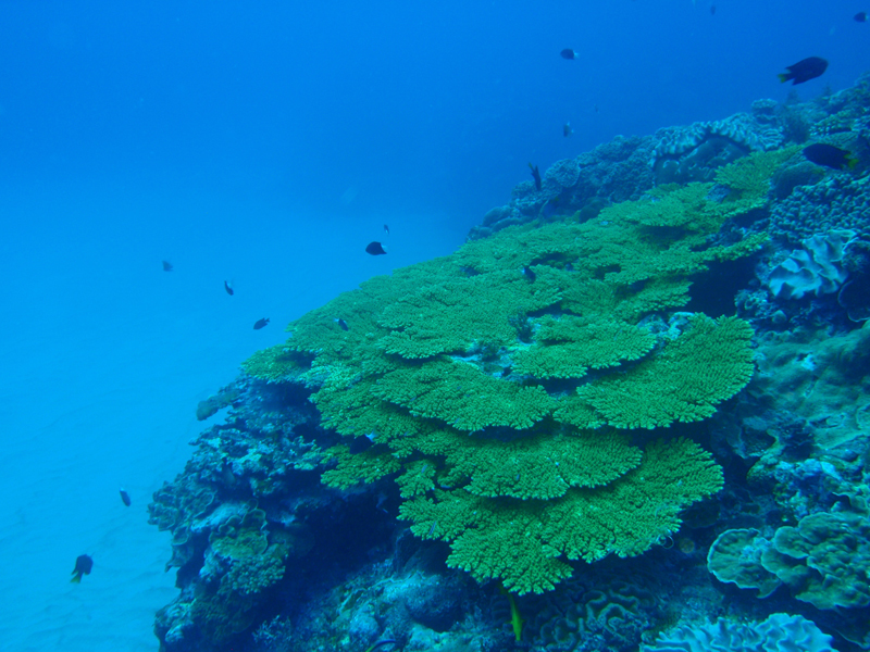 2014.08 奄美 The 4th day The 3rd Dive_a0013160_19480764.jpg