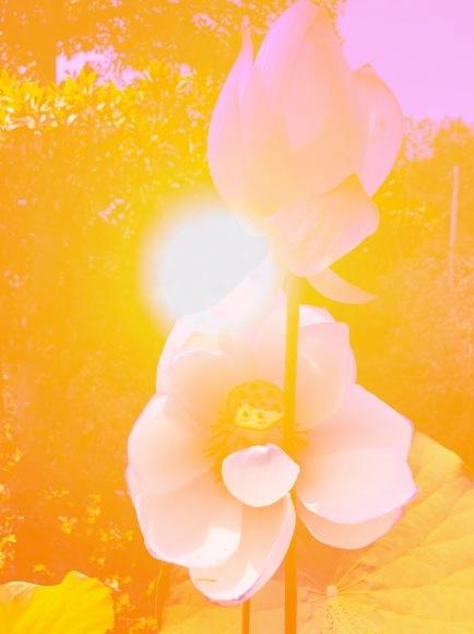 光の花が咲く☆エクスペアリセラピスト伝授でした_c0195362_10131677.jpeg