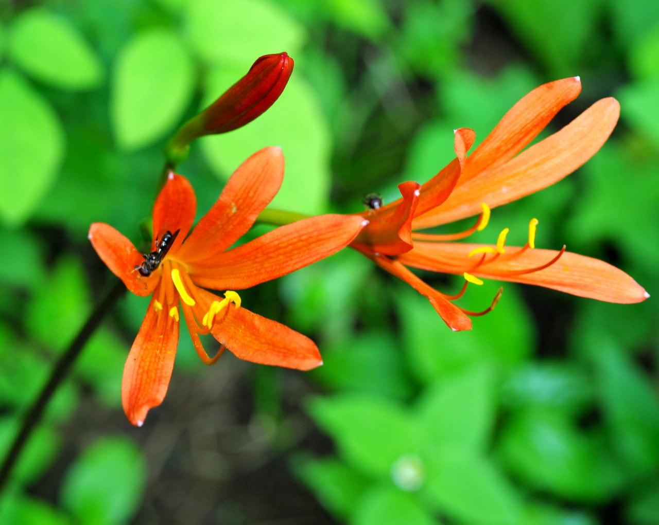 少林山境内で撮れた花や虫_c0305565_17384389.jpg