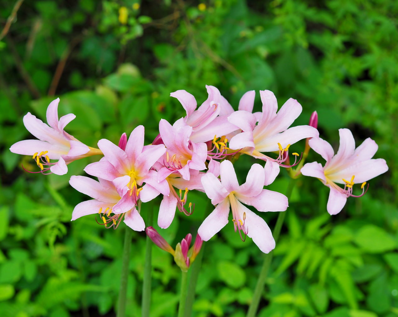 少林山境内で撮れた花や虫_c0305565_17402033.jpg