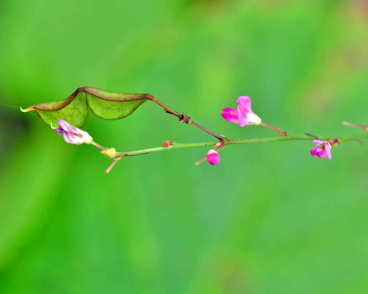 少林山境内で撮れた花や虫_c0305565_17412325.jpg