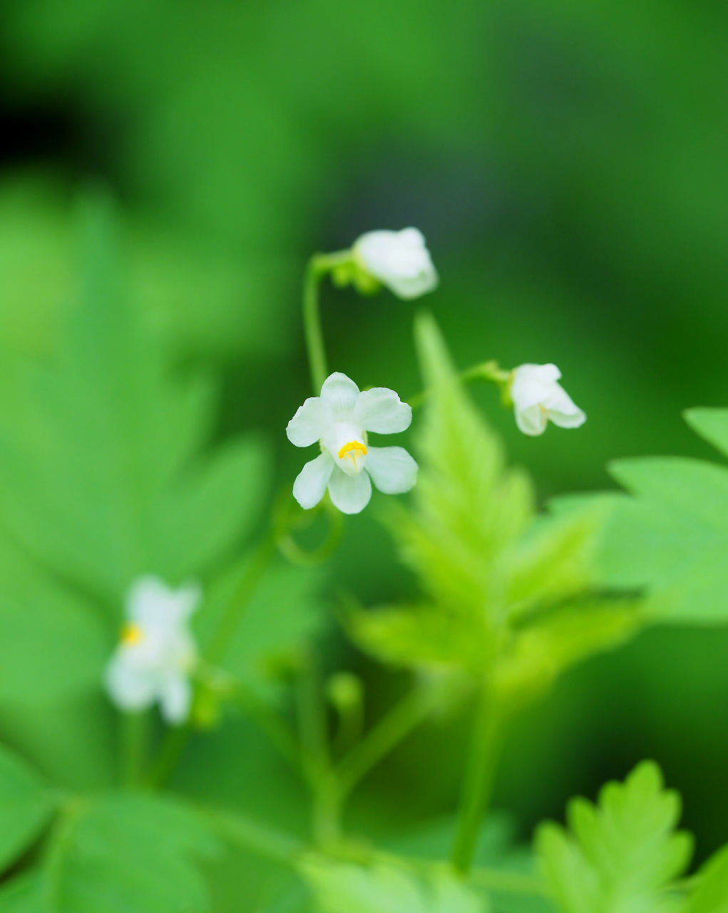 少林山境内で撮れた花や虫_c0305565_17420157.jpg